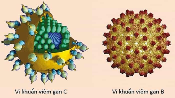 Viêm gan tự miễn khi hệ thống miễn dịch của cơ thể tấn công vào tế bào gan